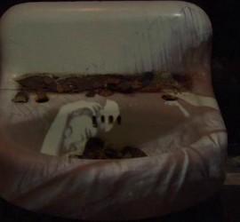 Barbara Hammer - Maya Deren's sink