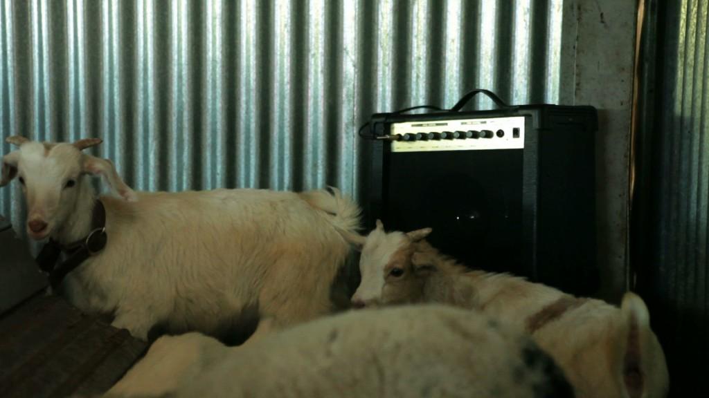 Animalización2
